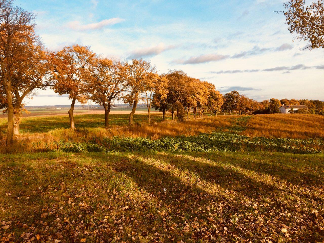 jesienny widok podczas wycieczki rowerowej
