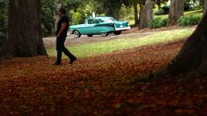 Banner -- Autumn stroll at Wombat Botanic Gardens, Daylesford.