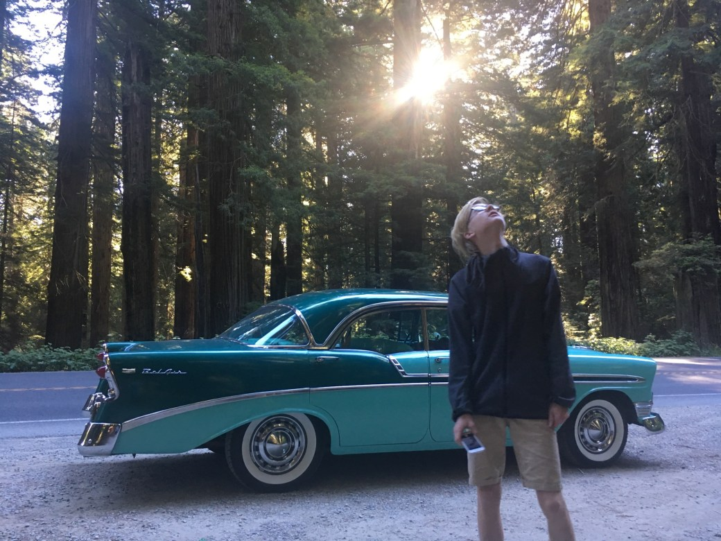 1956 Chevrolet, redwoods forests, California (USA).