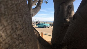 'Through the Looking Glass' trees at St. Kilda