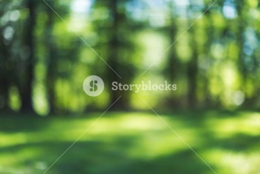 Abstract blurred spring forest background image created in camera Royalty Free Stock Image Storyblocks