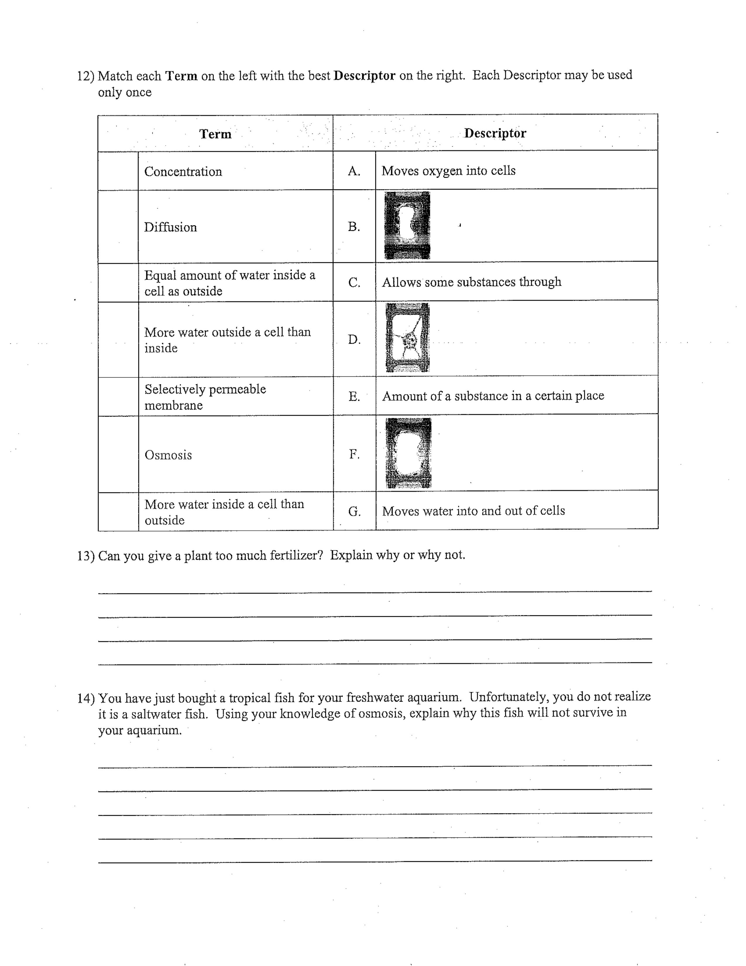 Diffusion Amp Osmosis Worksheet