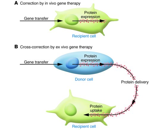 in vivo gene therapy diagram armstrong furnace wiring jci microglia a cellular vehicle for cns versus ex is