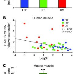 Mouse Skeletal Diagram 2003 Mitsubishi Eclipse Gt Stereo Wiring Jci Increased Srf Transcriptional Activity In Human And Figure 2