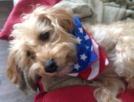 Lindsay's pup Hattie celebrated Independence Day (with a bandana from Whitney Sirois)!