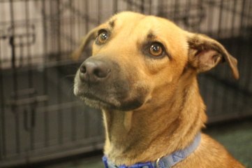 Dog from Mexico up for adoption at Dogtopia Erindale