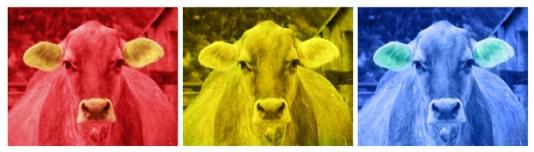 Warhol Cows