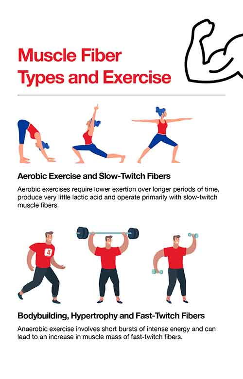 Muscle fiber and exercise type