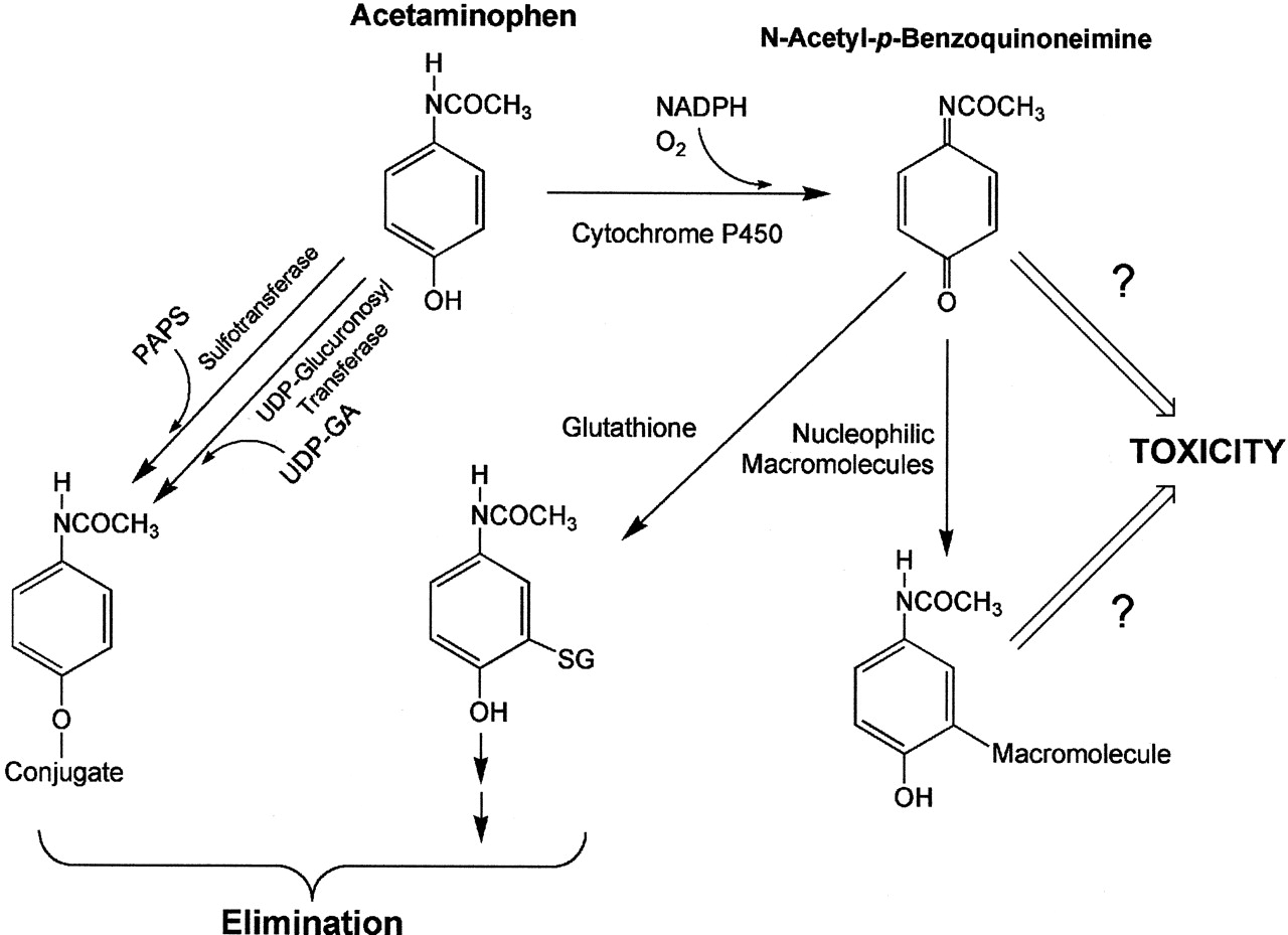 Balanced Chemical Equation For Synthesis Of Acetaminophen