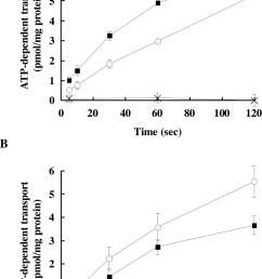 functional analysis of dog multidrug resistance associated protein 2diagram mrp2 15 [ 807 x 1280 Pixel ]