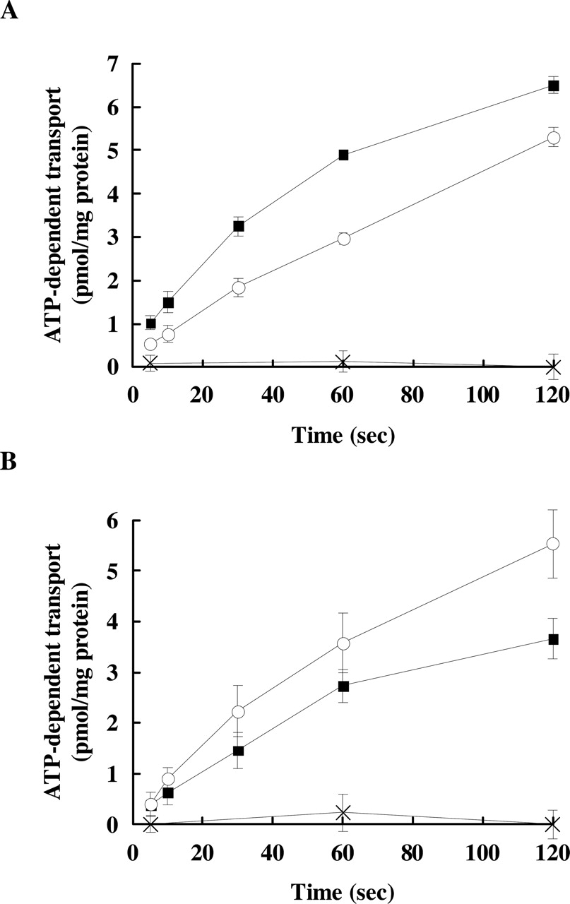 hight resolution of functional analysis of dog multidrug resistance associated protein 2diagram mrp2 15