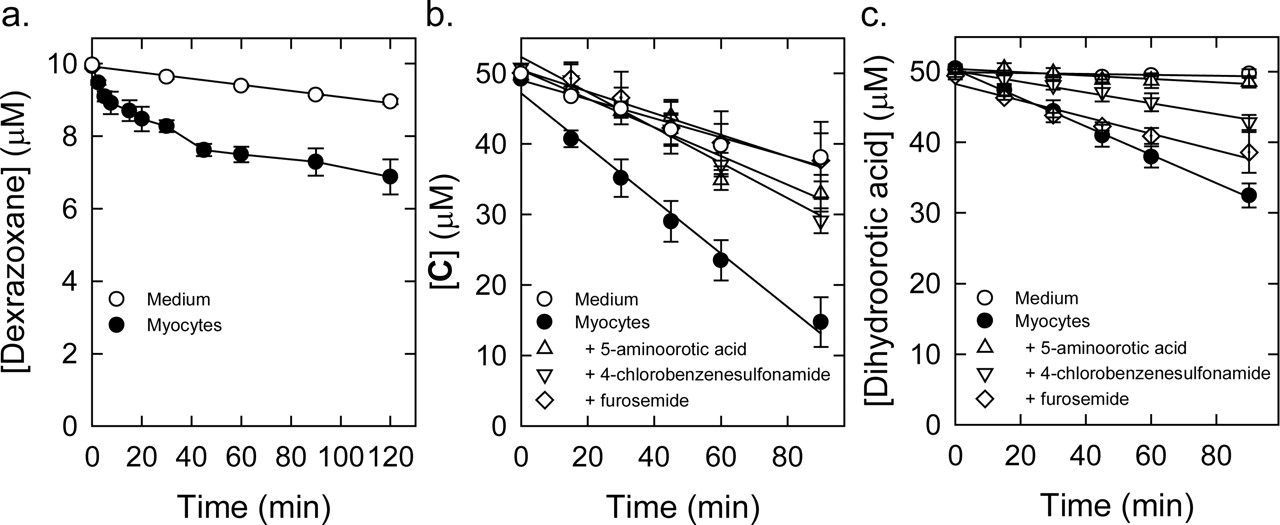 METABOLISM OF THE CARDIOPROTECTIVE DRUG DEXRAZOXANE AND