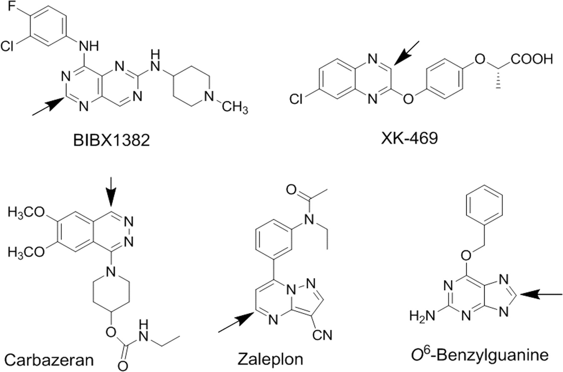 Characterization of Aldehyde Oxidase Enzyme Activity in