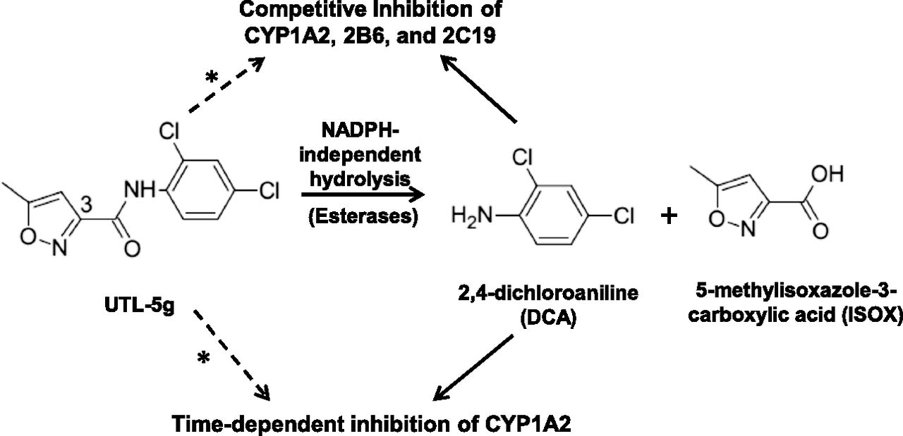 In Vitro Metabolism and Drug-Drug Interaction Potential of