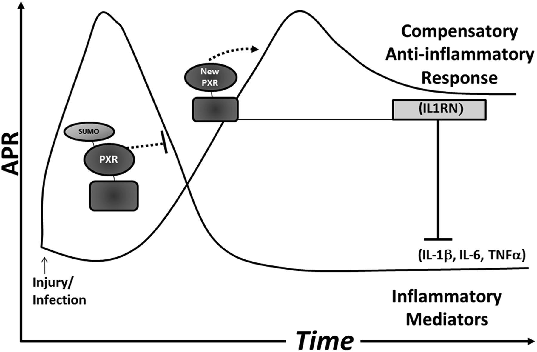 Pregnane X Receptor Modulates the Inflammatory Response in