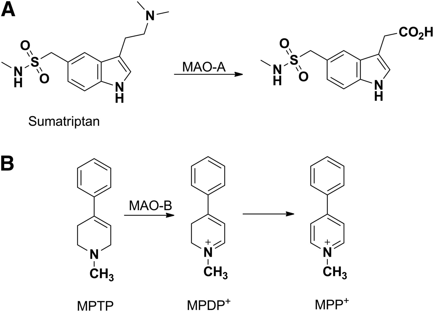 Cytochrome P450 and Non–Cytochrome P450 Oxidative