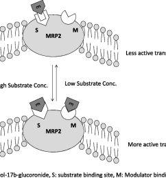 coproporphyrin i a fluorescent endogenous optimal probe substratediagram mrp2 13 [ 1280 x 1068 Pixel ]