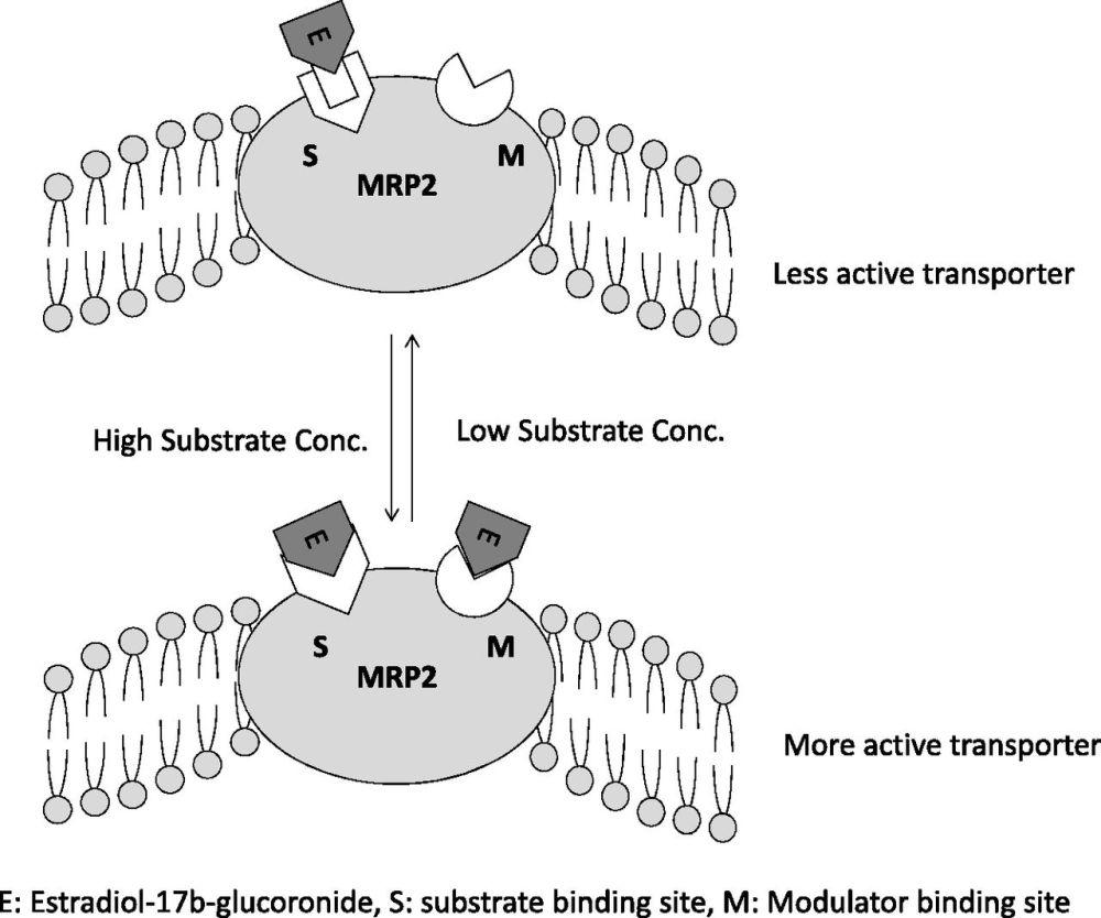 medium resolution of coproporphyrin i a fluorescent endogenous optimal probe substratediagram mrp2 13