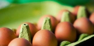 classification des œufs