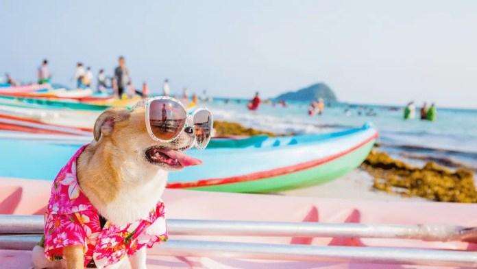chien à la plage en vacances