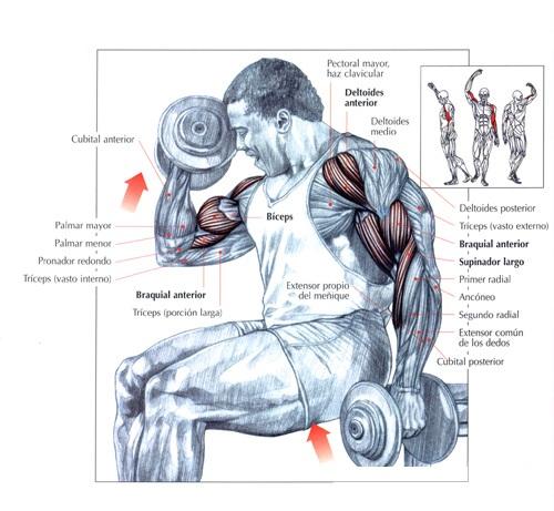 Descargar rutinas de musculacion pdf