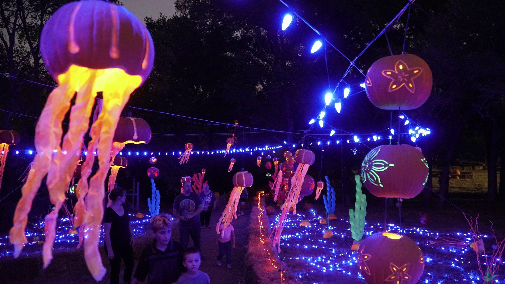 pumpkin nights in arlington is about