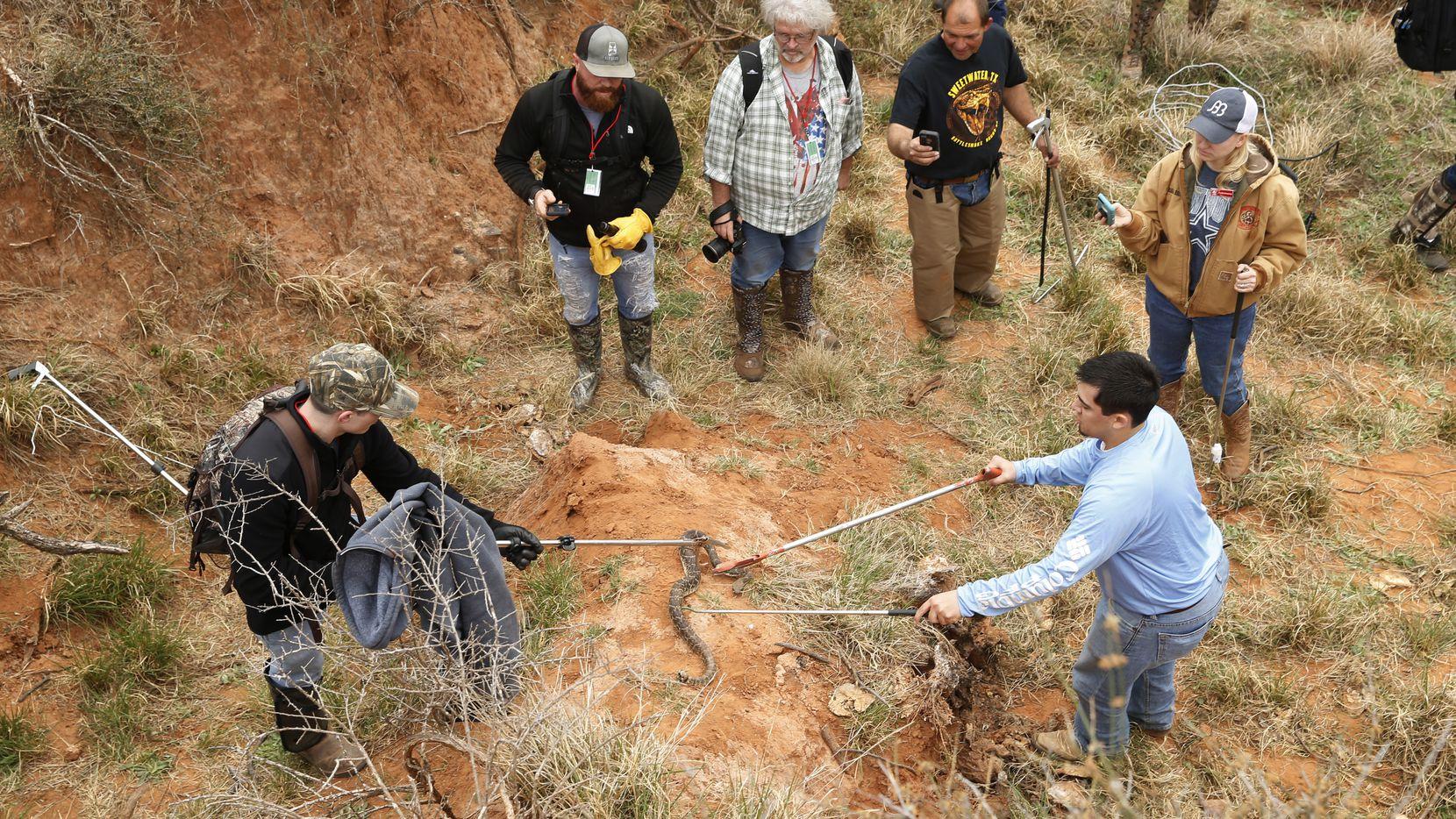 Cancel Next Year's Rattlesnake Roundup