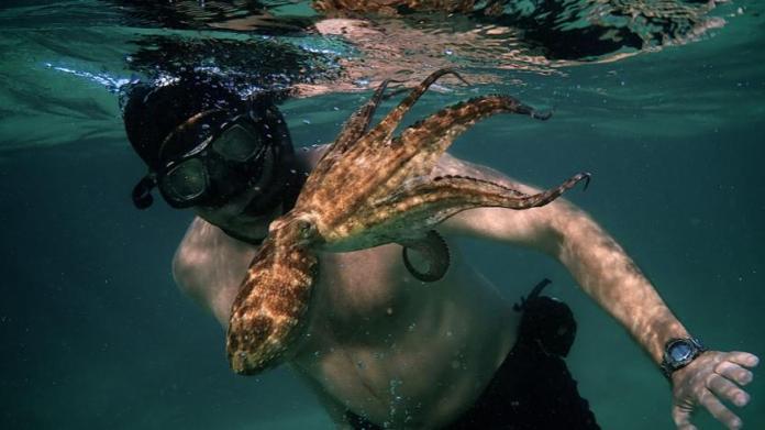 Craig Foster My Octopus Teacher Summary & Analysis 2021 Documentary Film