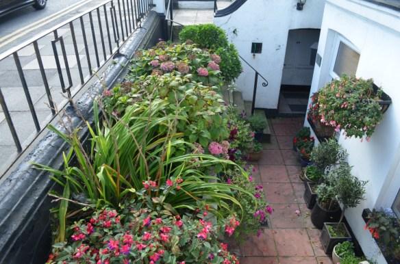 deal sidewalk garden