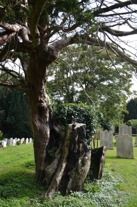 shoulden oak