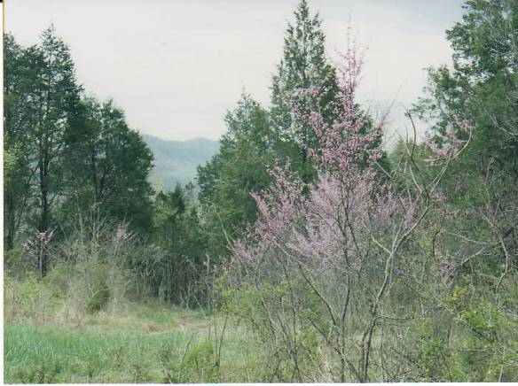 mary parkey spring