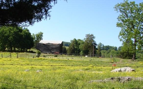 clarkson field crop