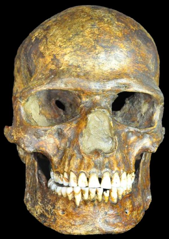 k14 skeleton