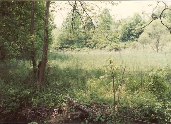 Lazarus huckster field 2