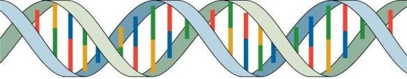 double helix band