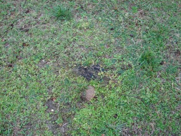 Luremia oak ridge fieldstone