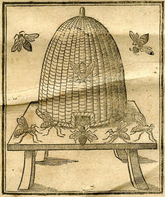 beehive crop