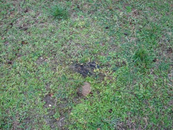 Oak Ridge stone marker