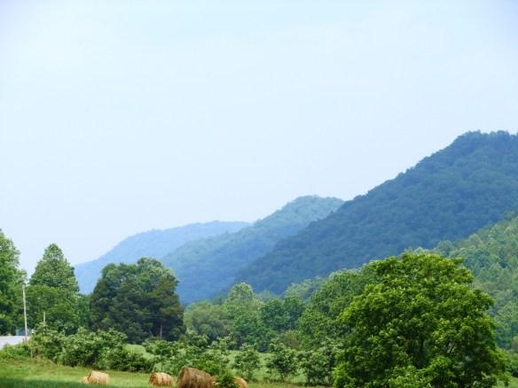 Blackwater and Newman's Ridge