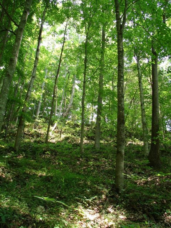 Vannoy Hancock wooded2