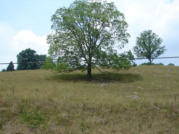 Vannoy hillside