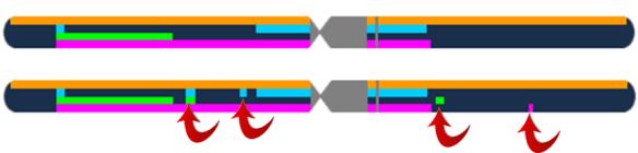 4 gen chr 1 small segments