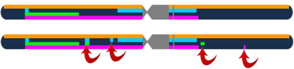 4 gen chr 1