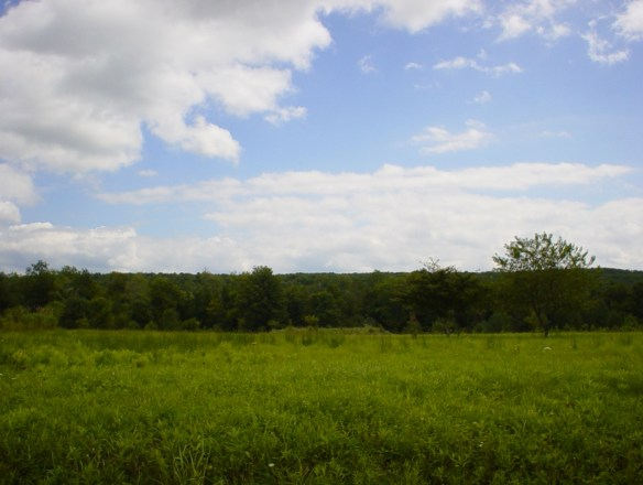 Jackson Hill field