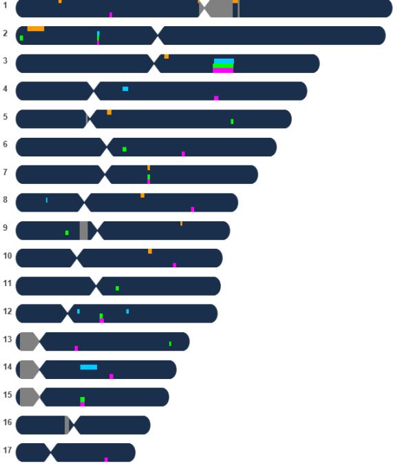 JDM chromosome browser