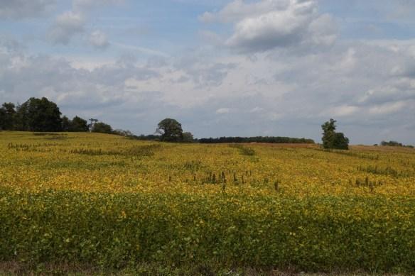 eliz-ulrich-field