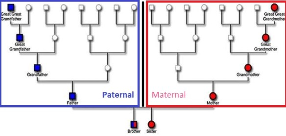 Paternal and Maternal sides