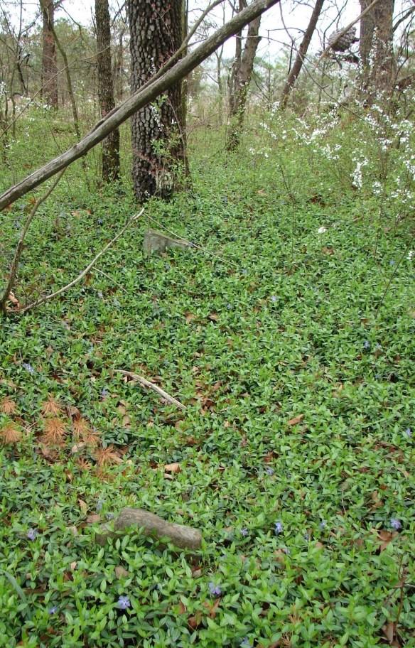 James Moore cemetery 8 crop.jpg
