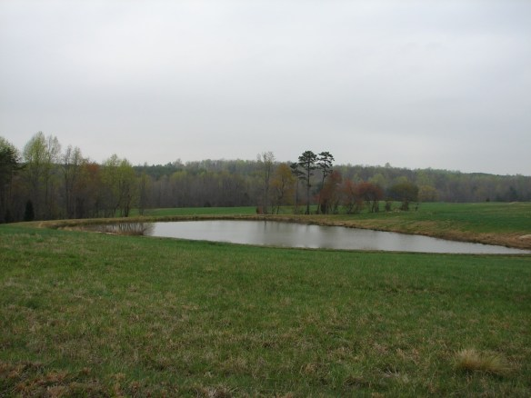 James Moore pond.jpg