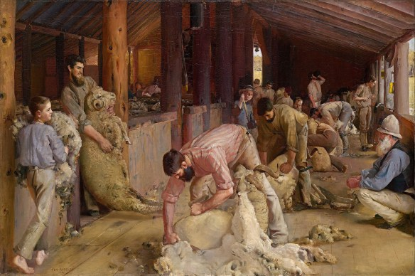 Rachel Rice sheep shearing.jpg